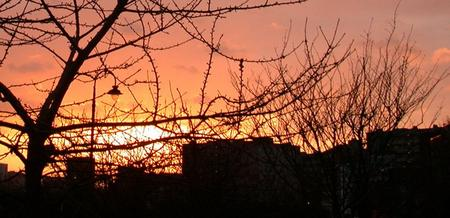 bare tree branches and buildings silhouetted against a beautiful sunrise - 29 December 2003 - click to enlarge