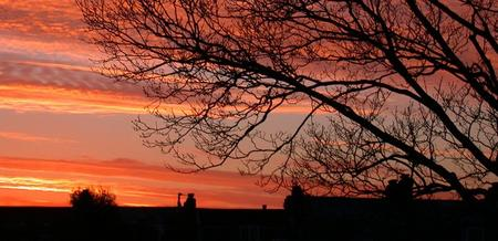 tree branches and chimneys silhouetted against a pink sunrise - 30 December 2003 - click to enlarge